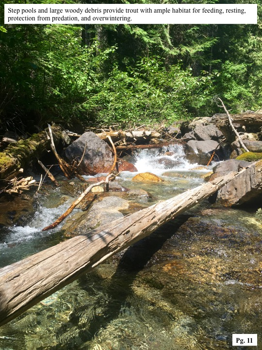 Step pools and large woody debris provide trout with ample habitat for feeding, resting, protection from predation, and overwintering.