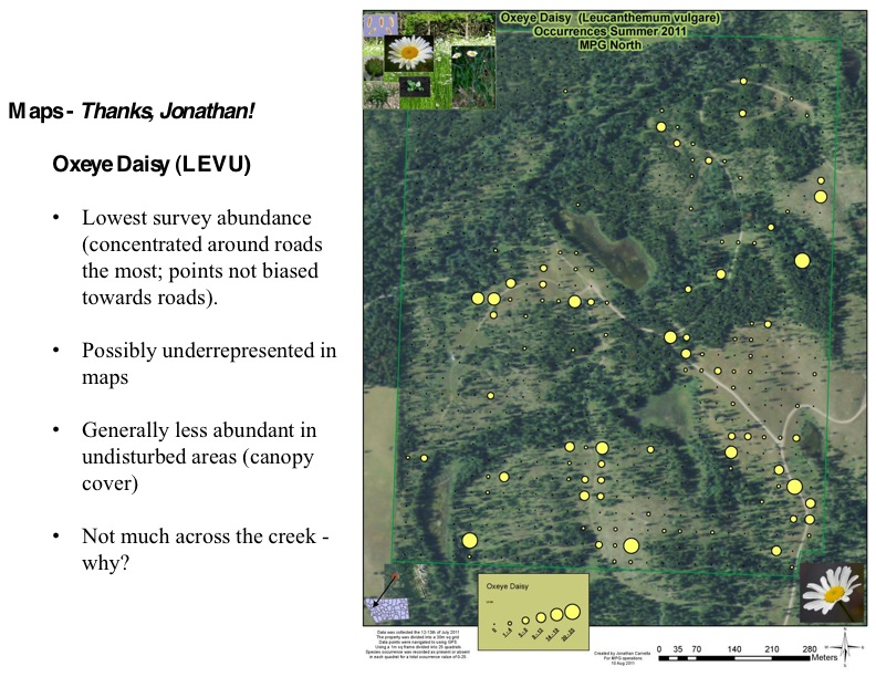 Oxeye Daisy (LEVU) • Lowest survey abundance (concentrated around roads the most; points not biased towards roads).