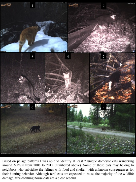 Based on pelage patterns I was able to identify at least 7 unique domestic cats wandering around MPGN from 2008 to 2015 .