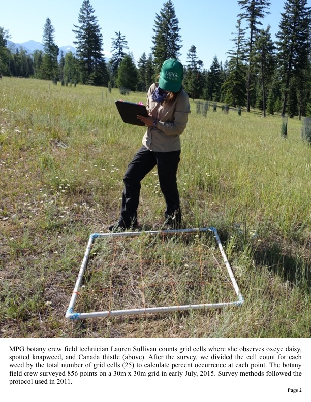 MPG botany crew field technician Lauren Sullivan counts grid cells where she observes oxeye daisy, spotted knapweed, and Canada thistle