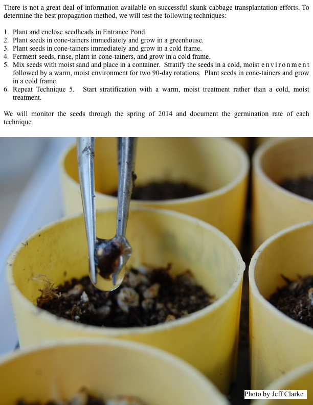 We will monitor the seeds through the spring of 2014 and document the germination rate of each technique