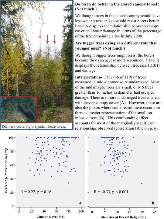 Do birch do better in the closed canopy forest? (Not much.) We thought trees in the closed canopy would have less water stress..