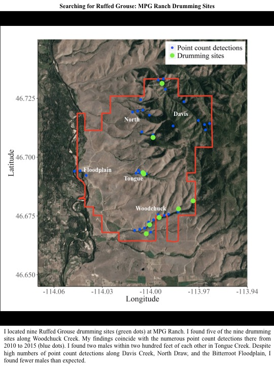 I located nine Ruffed Grouse drumming sites (green dots) at MPG Ranch.