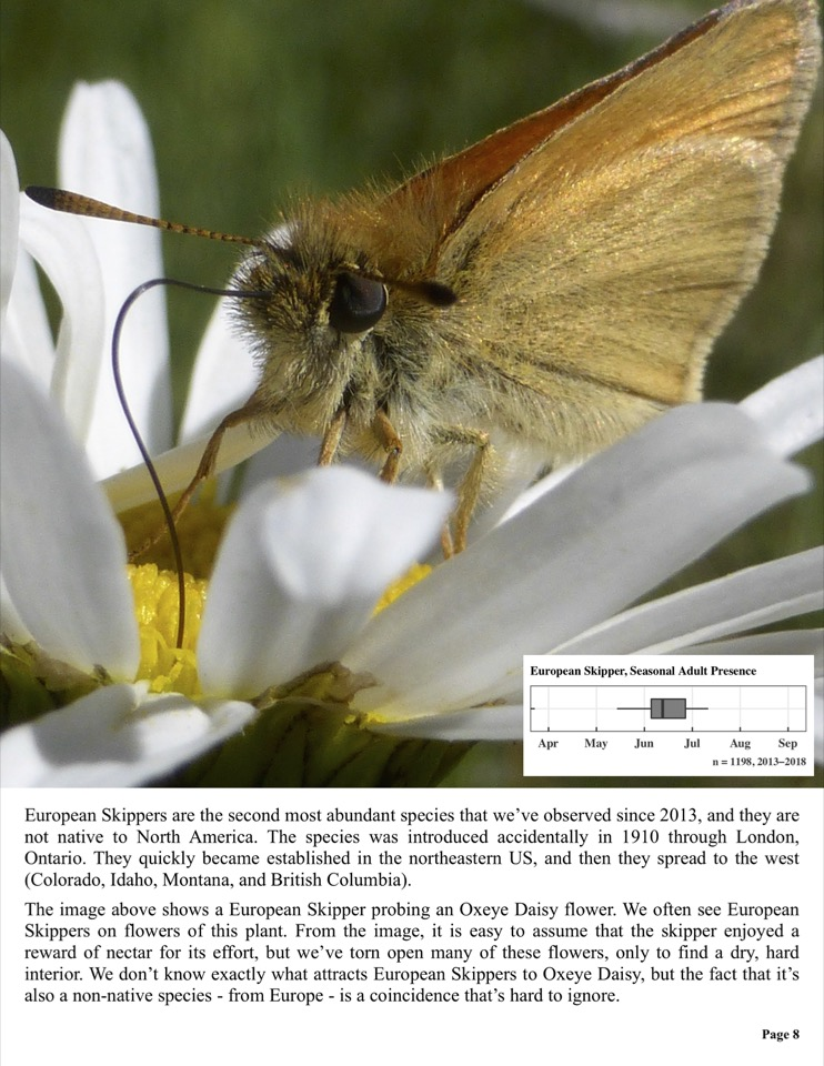 European Skippers are the second most abundant species that we've observed since 2013, and they are not native to North America.