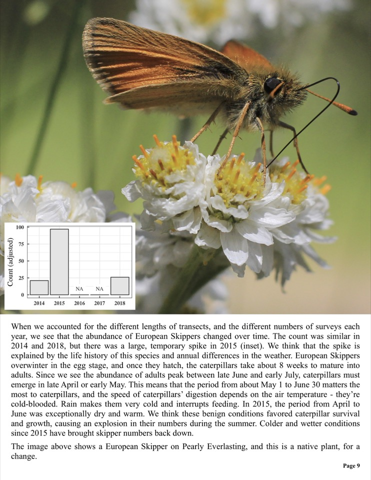 When we accounted for the different lengths of transects, and the different numbers of surveys each year, we see that the abundance of European Skippers changed over time.