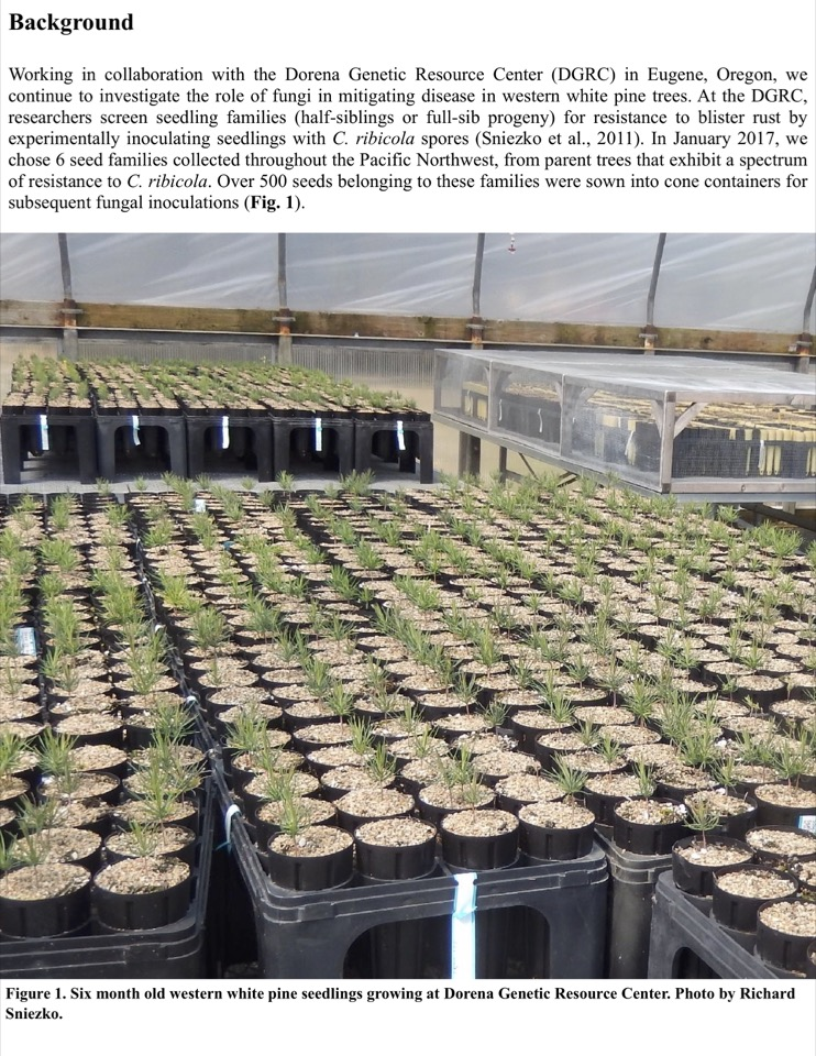 Working in collaboration with the Dorena Genetic Resource Center (DGRC) in Eugene, Oregon, we continue to investigate the role of fungi in mitigating disease in western white pine trees