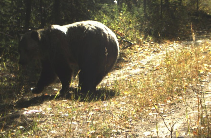 09-17-07 Field Note: Grizzlies at MPG North