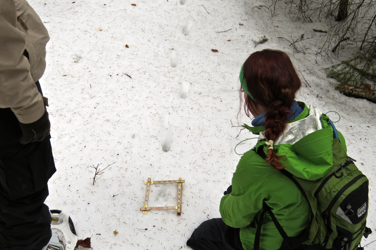 We found coyote tracks and followed them through thic k forest and into an open meadow where snow conditions deteriorated.