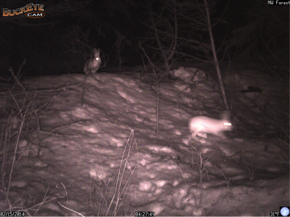 This pair hopped through the northwest forest on Feb. 15.
