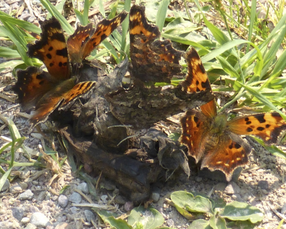 Butterfly Surveys: Trends and Observations