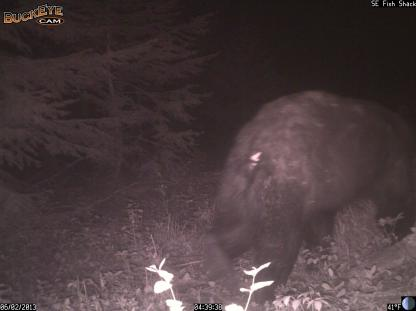Unknown Bear