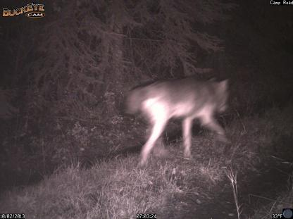 Unknown Canid