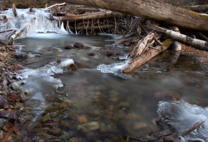 An icey Cooney Creek by Beau Larkin