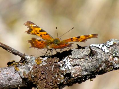 Gray Comma by Larinda Hunt